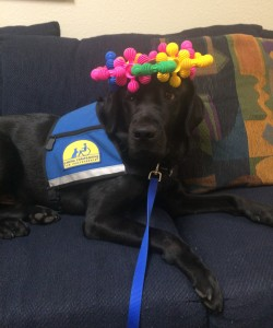 Render is a courthouse facility dog at the Fannin County Children's Center.  In this photo he is wearing a crown made by a child who came to the center for a meeting with her advocate and attorney.
